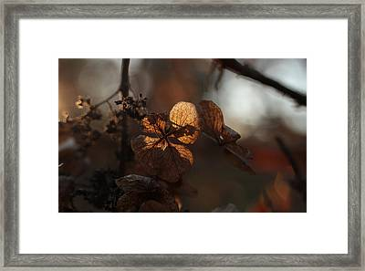 Night Lights Framed Print by Connie Handscomb