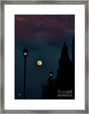 Night Lights Framed Print by Lydia Holly