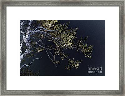 Night Framed Print by Lois Bryan
