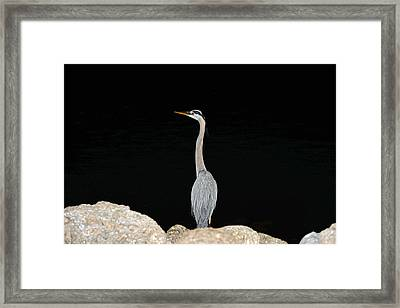 Night Of The Blue Heron 2 Framed Print