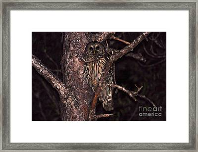 Night Owl Framed Print by Al Powell Photography USA