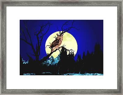 Night Owl Framed Print by Aleirah Stevens