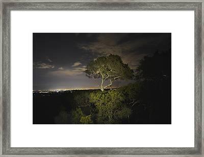 Night Glow Of A Tree Framed Print by Alex King
