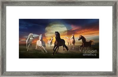 Night Play Framed Print by Melinda Hughes-Berland