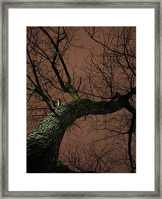 Night Tree Framed Print by Michel Mata