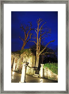 Night Trees Framed Print by Stephen Richards