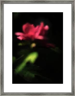 Night Vision Framed Print by Rebecca Sherman
