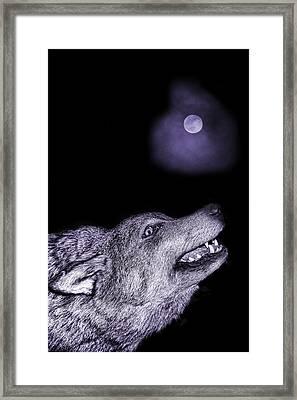 Night Wolf Framed Print by Angel Jesus De la Fuente