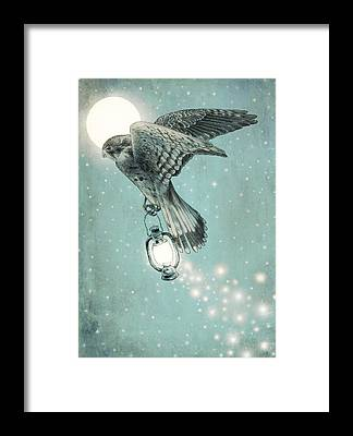 Hawk Framed Prints