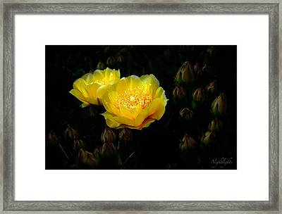 Nightlights Framed Print