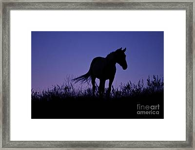 Nights Of Freedom Framed Print