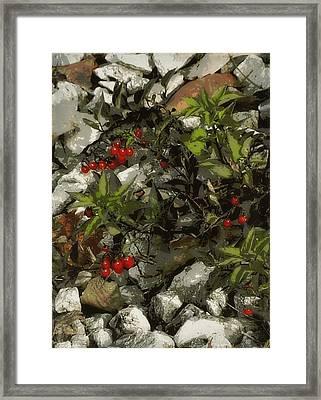 Nightshade On The Rocks Framed Print