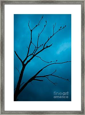 Nightwatch II Framed Print