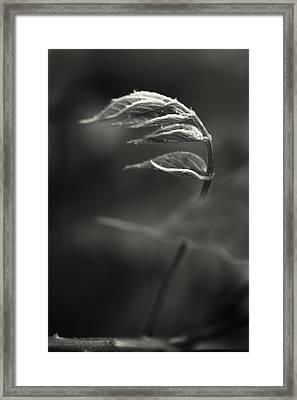 Nike Of Samothrace Framed Print by Valentina Bunic