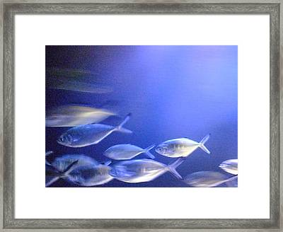 Nine Fishes Swimming Framed Print