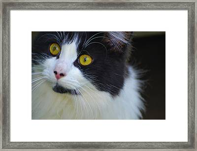 Framed Print featuring the photograph Nine Months Old  by Naomi Burgess