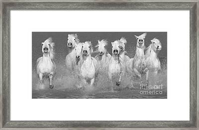 Nine White Horses Run Framed Print by Carol Walker