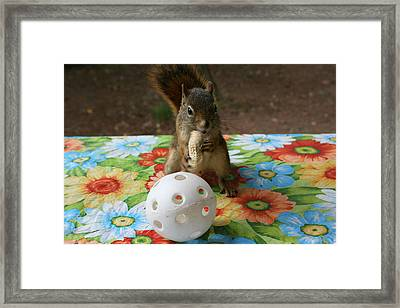 Framed Print featuring the photograph Ninja Squirrel by Paula Brown