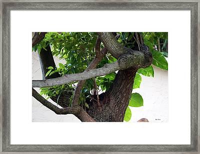 Framed Print featuring the photograph Nispero Tree by Rafael Salazar