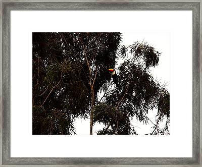 Framed Print featuring the photograph No Disguise by Zinvolle Art