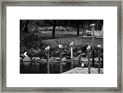 No Diving Framed Print