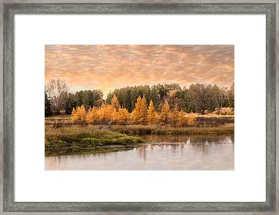 Tamarack Buck Framed Print