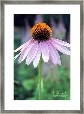 No Moment Like The Present Framed Print by Mary Lou Chmura