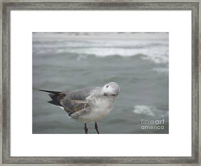 No No No Framed Print by Deborah DeLaBarre