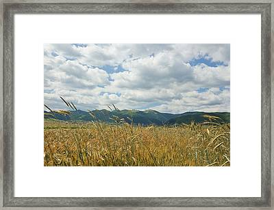 Wheat In The Wind Framed Print