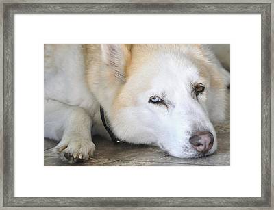 No Place Like Home Framed Print by Lisa  DiFruscio
