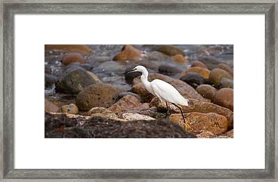 No Re-egrets Framed Print