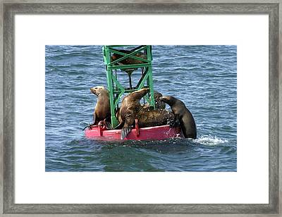 No Room At The Bouy Framed Print by Gary Lobdell
