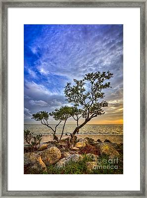 No Stress Today Framed Print by Marvin Spates