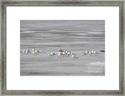 No Swimming Ice Skating Only Framed Print by John Telfer