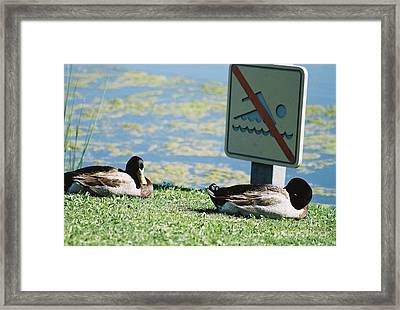 Framed Print featuring the photograph No Swimming by Kerri Mortenson