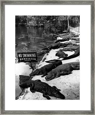 No Swimming Framed Print by Retro Images Archive