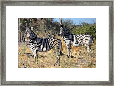 No Two Alike Framed Print