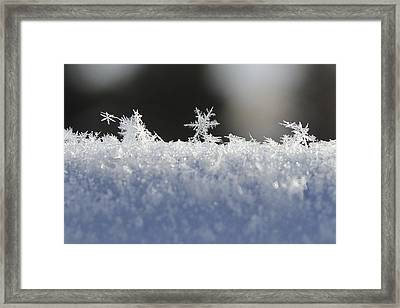 No Two Exactly Alike Framed Print by Penny Meyers