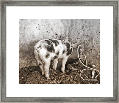 Framed Print featuring the photograph No Way Out by Sandi Mikuse