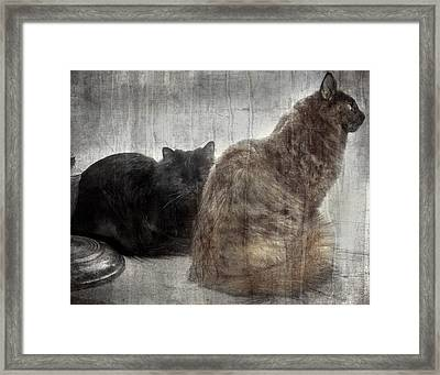 No Worries Framed Print by Camille Lopez