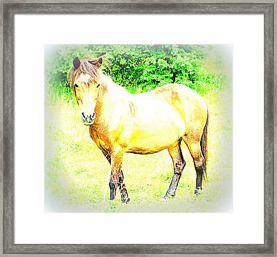 I Have No Worries Today But Come And Ask Me Tomorrow  Framed Print by Hilde Widerberg