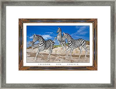 No Zoo Zebras Framed Print by Betsy Knapp
