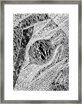 I Am A Winner 10 Framed Print by Tetka Rhu