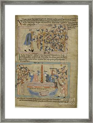 Noah And His Vines Framed Print by British Library