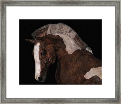 Noble Framed Print