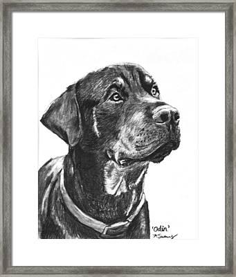 Noble Rottweiler Sketch Framed Print