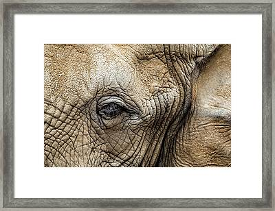 Nobody Knows The Trouble I've Seen Framed Print by Hali Sowle