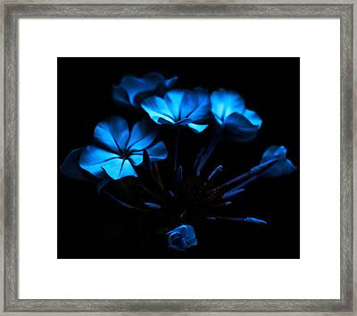 Nocturnal Blue Framed Print