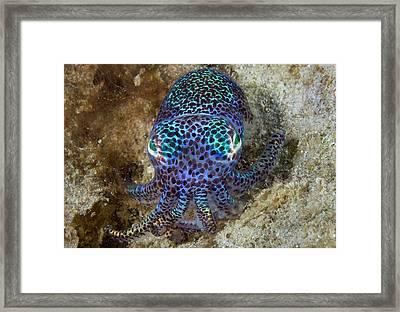 Nocturnal Bobtail Squid (sepiolida Framed Print