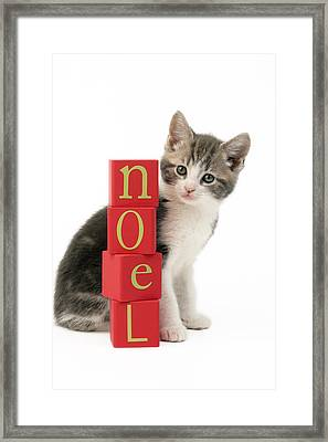 Noel Kitten Framed Print